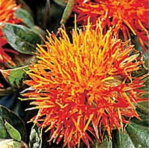 Safflower