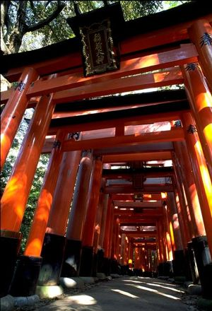 Torii gates at Fushimi Inaria